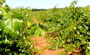 Castilla y León, la más laudeada por los lectores de la Guía Vinos Gourmets