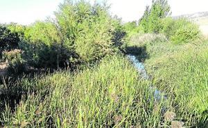Villanueva de los Infantes pide a la CHD que limpie el río «de una vez»