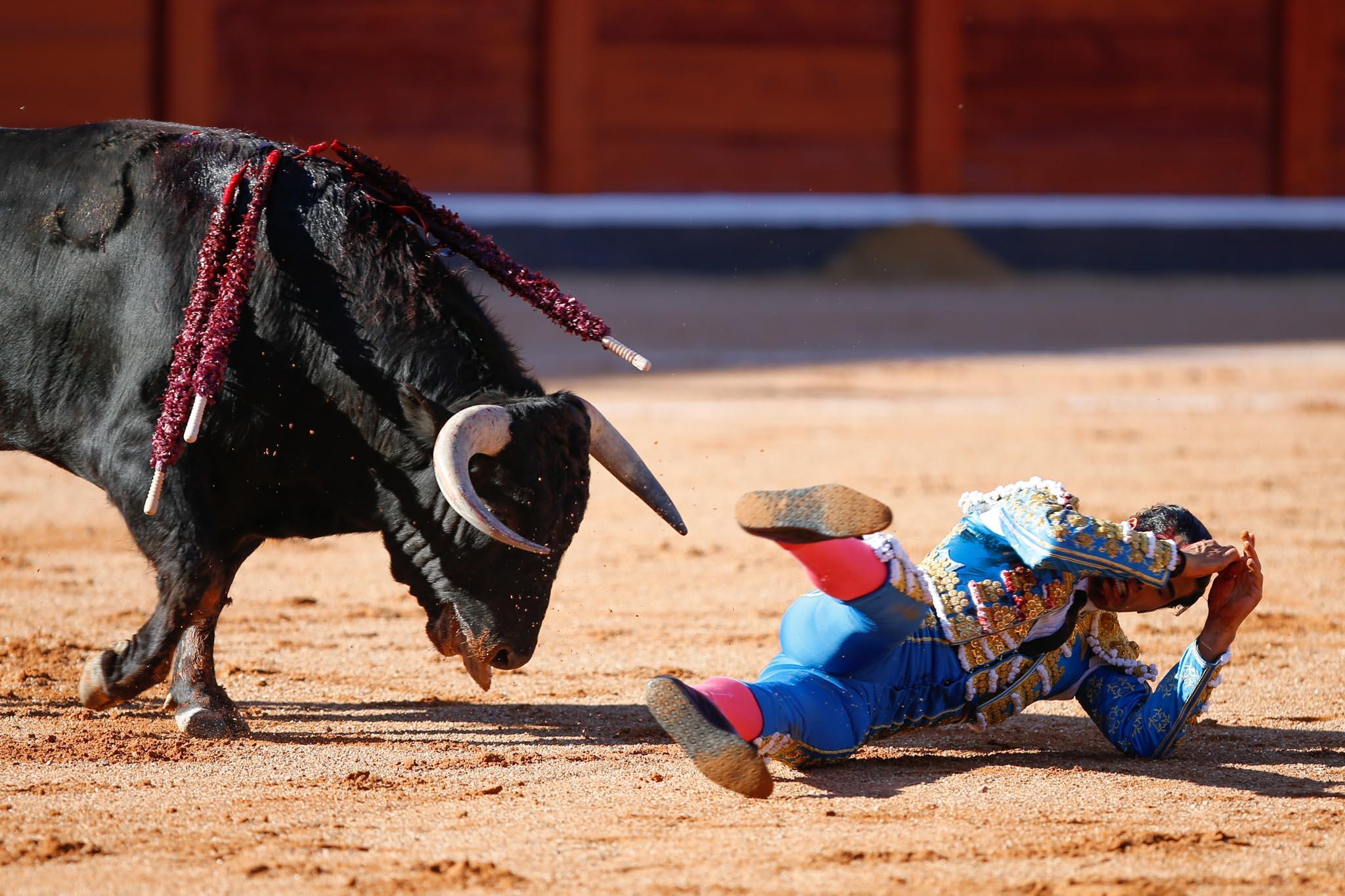 Novillada para San Román, Diosleguarde y Aguilar en Salamanca