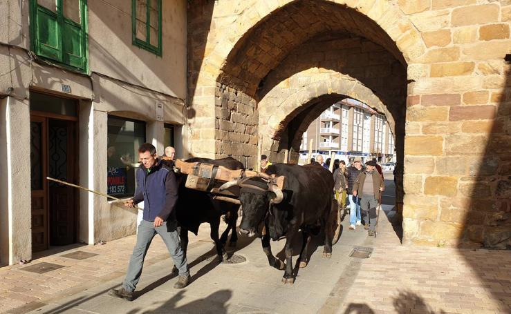 Los carreteros reivindican el antiguo oficio en una ruta por Aguilar
