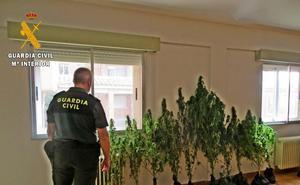 Detenido un hombre mientras regaba una plantación de marihuana en Villamediana