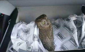 Un vecino se encuentra una cría de autillo y la Policía Local la traslada al Centro de Recuperación de Aves