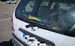 Multan al dueño de un perro por dejarlo en el coche mientras acudía al gimnasio en Valladolid