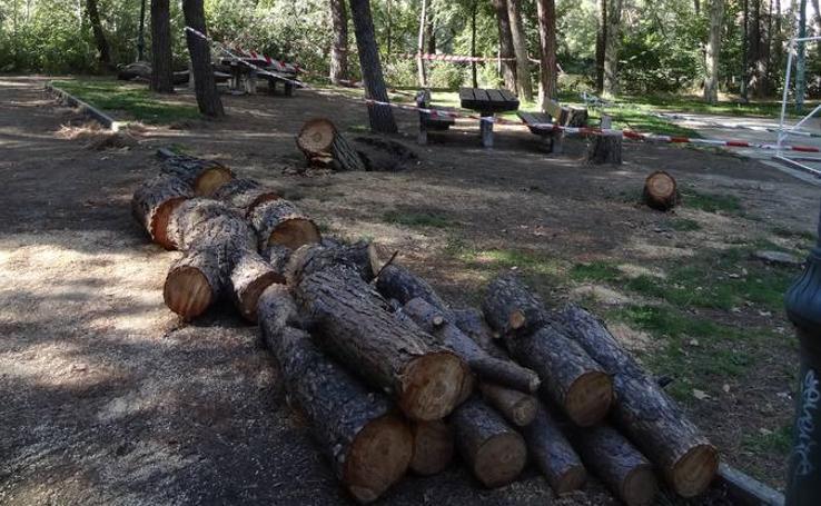 Pinos troceados en el parque Ribera de Castilla
