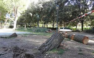 Trocean dos pinos derribados por el viento sobre un camino del parque Ribera de Castilla