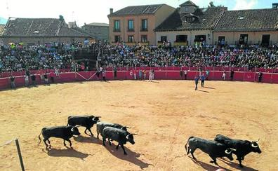El toro como protagonista