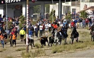 Un toro se refugia en una zona de difícil acceso y tiene que ser recogido en el encierro de Portillo