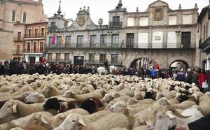 Setecientas ovejas tomarán el casco histórico de Medina el 6 de octubre