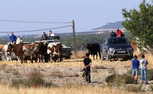 Los festejos taurinos focalizan la jornada del sábado en las fiestas de Vallelado