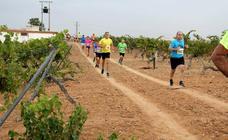 Más de 300 atletas participan en la carrera 'Corriendo entre viña' de Rueda (2/2