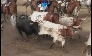 Tordesillas vive una segunda suelta «complicada» previa a la celebración del Toro de la Vega