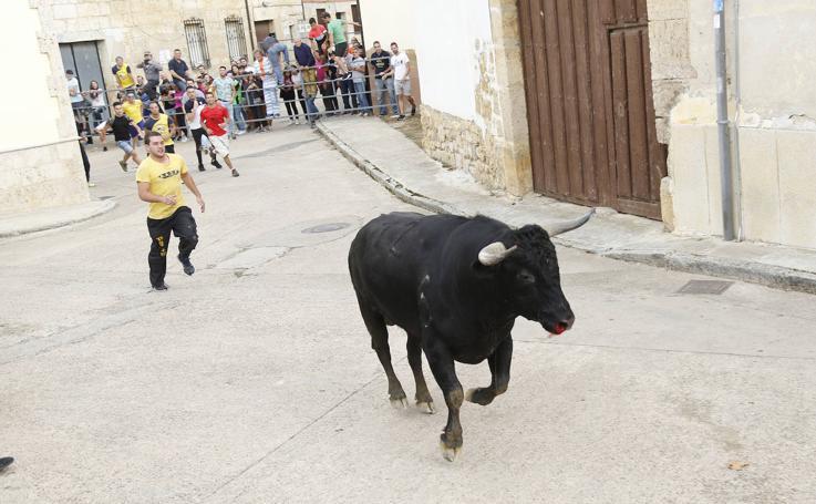 Toro de pueblo en Astudillo