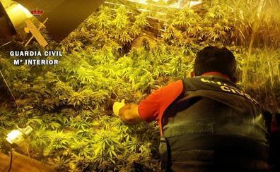 Detenido por cultivar 331 plantas de marihuana en una casa de un pueblo de Palencia