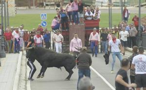 Tordesillas vive una segunda suelta «complicada», previa al festejo del Toro de la Vega
