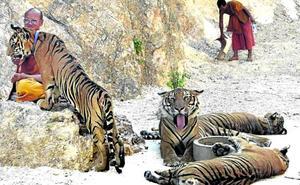 Ni paz ni amor en el Templo del Tigre