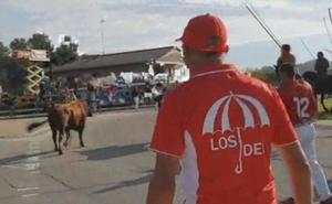 Tordesillas celebra un encierro limpio y tenso, que consigue llevar a los cinco toros al coso