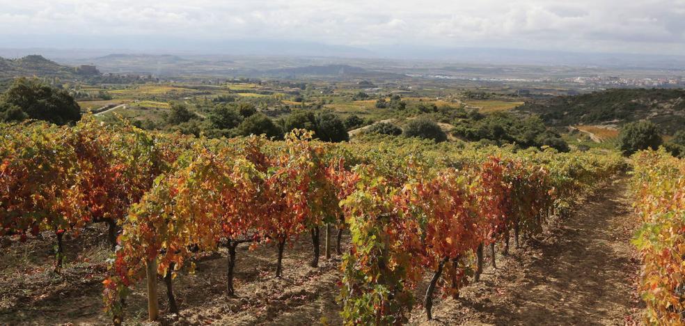 Los consejos reguladores de Cava, Rioja y Jumilla podrán limitar las plantaciones de viñedo