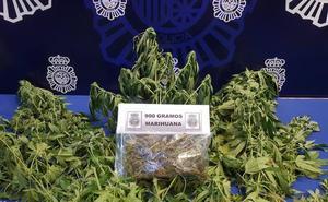 Avisan a la Policía por una discusión y descubren 900 gramos de marihuana en un piso de Valladolid