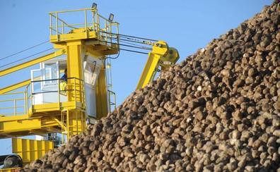 Acor inicia su campaña con la previsión de superar 1,5 millones de toneladas de remolacha