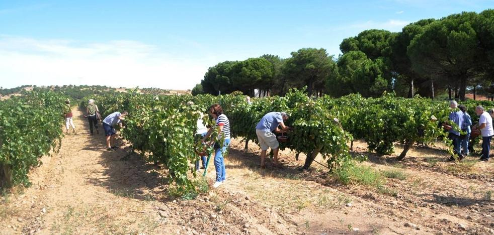 Una época para onocer el proceso del vino, de la cepa a la copa