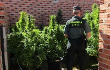 Desmantelan una plantación de marihuana en la localidad vallisoletana de Torrecilla de la Orden