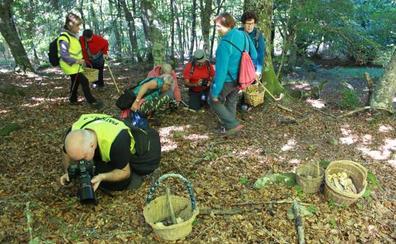 El brote de setas por las últimas lluvias augura una buena campaña micológica en Palencia