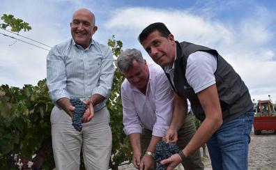 La vendimia alcanza el ecuador en Castilla y León con 144 millones de kilos de uva recogidos