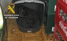 Denunciada una tienda de mascotas de Burgos por atención deficiente a los animales