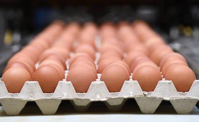 Unos huevos procedentes de una granja de Segovia causan cuarenta casos de salmonelosis en Vizcaya