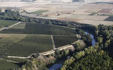 Ribera del Duero: en ruta por los caminos del vino