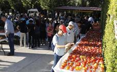 Piñel de Abajo exhibe novecientas variedades de tomates, «la mayor muestra del mundo»