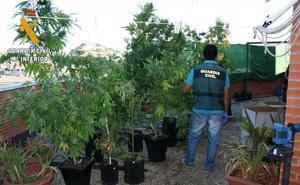 Detienen a un hombre que cultivaba doce plantas de marihuana en la terraza de su casa de Palencia