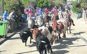 Rápido y limpio encierro a caballo en El Maíllo