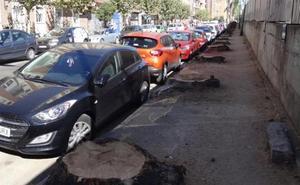Los álamos de la avenida de Irún de Valladolid pierden la guerra contra las raíces