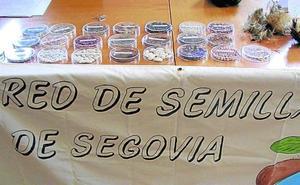 Vellosillo acogerá el sábado un intercambio de semillas de otoño