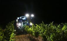 La DO Rueda finaliza la vendimia con con 113.720.966 kilos, el 10% menos que en 2018 por la sequía