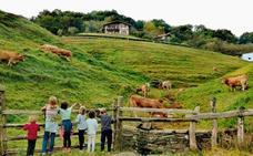 Bosques, viñedos y el misterio de descubrir Navarra en otoño