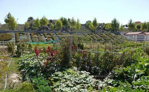 Las solitudes para optar a uno de los 130 huertos familiares de Carbajosa, a partir del lunes
