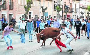 Una multitudinaria suelta pone el acento taurino a la Vendimia de Rueda