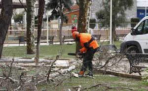 IU critica las «podas severas» de árboles y pide aclaraciones al grupo de gobierno