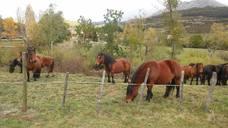 La Pernía disfruta de su feria del caballo