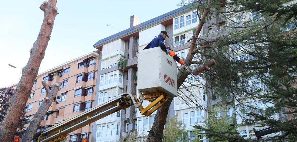 El Ayuntamiento de Palencia ordena talar 39 árboles que corren el riesgo de sufrir caídas