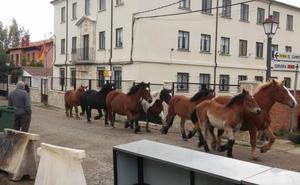 La Pernía celebra su feria del caballo