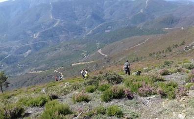 La Junta y Red Eléctrica plantarán 49.000 árboles en una zona calcinada en el año 2003 en Agallas