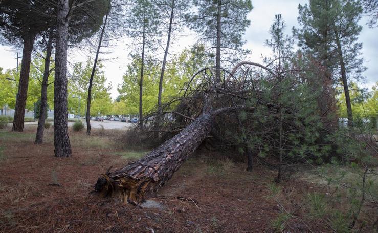 Falta de mantenimiento en el Parque Tecnológico de Boecillo