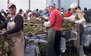 La inmigración, que supone el 15% del padrón rural, emerge como antídoto a la 'Segovia vaciada'