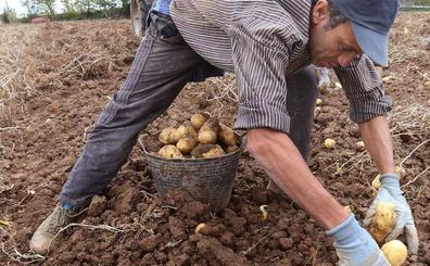 Palencia rinde homenaje a la patata