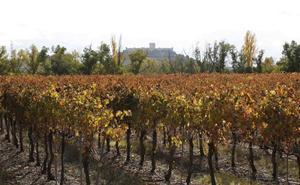 Ribera del Duero, Rueda y Toro modifican su pliego de condiciones para reforzar la calidad