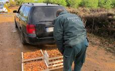 Las sanciones por recolección ilegal de setas en Palencia se multiplican por 12