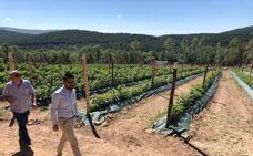 Siete familias de El Royo ya comercializan los primeros frutos rojos bajo la marca 'Bosque Soria, sabores de altura'